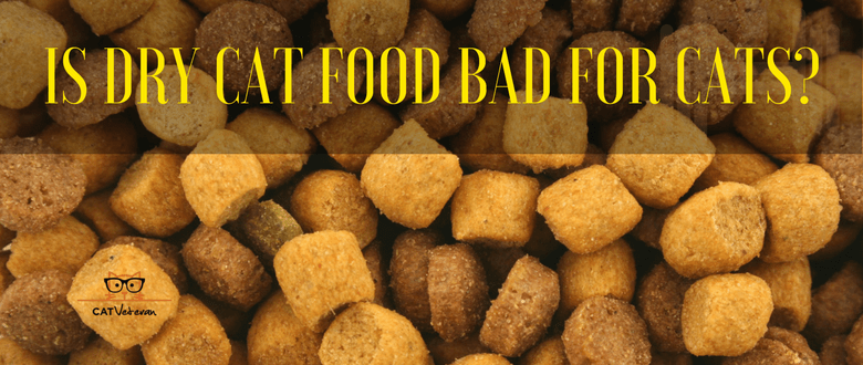Is Dry Cat Food Bad For Cats