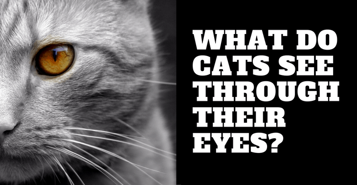 What Do Cats See Humans As
