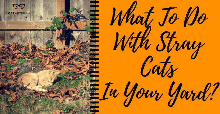 What To Do With Stray Cats In Your Yard-