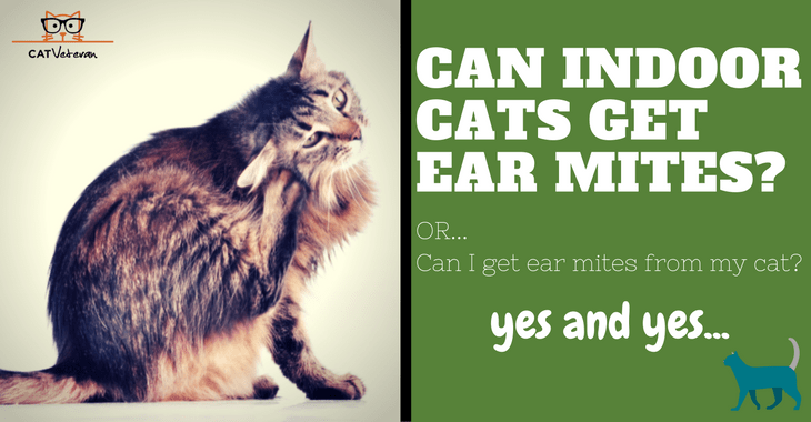 Ear Mites On Indoor Cats