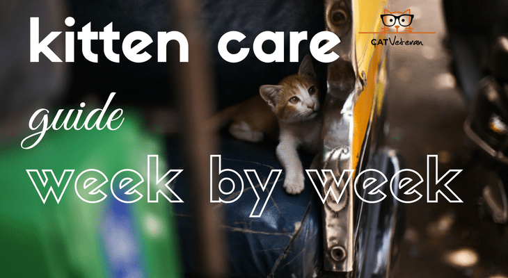 kitten care guide week by week