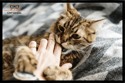 Why Do Cats Purr And Then Bite You?
