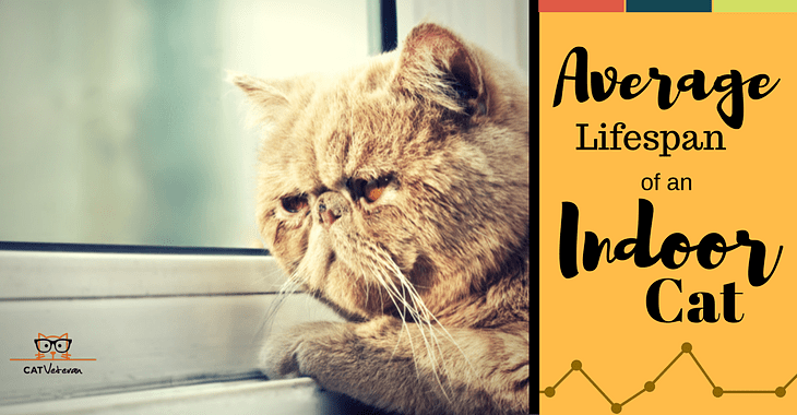 Average Lifespan Of An Indoor Cat