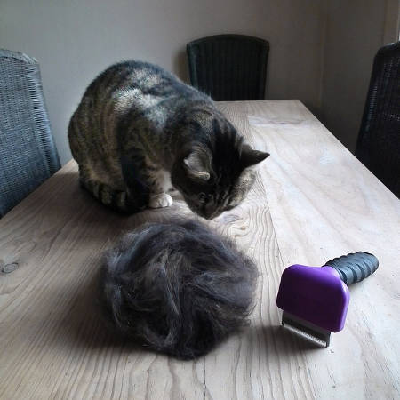 Cat Fur After Brushing
