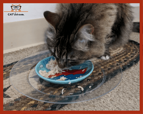 My Best Canned Cat Food For Indoor Cats Even Our Pickiest