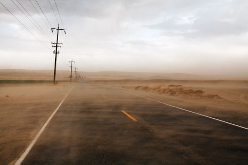 Dusty Road Matching Dusty Cat Litter