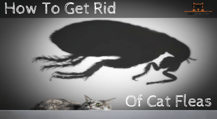 How To Get Rid Of Cat Fleas In Your Home