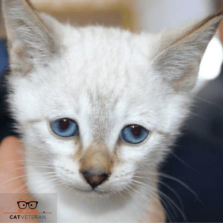 Sad Furry Kitten