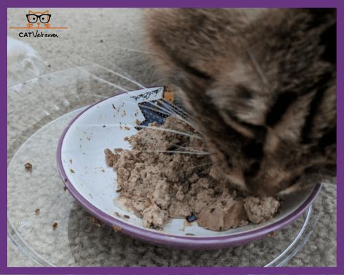 Tanta Eating Natures Variety Instinct Chicken