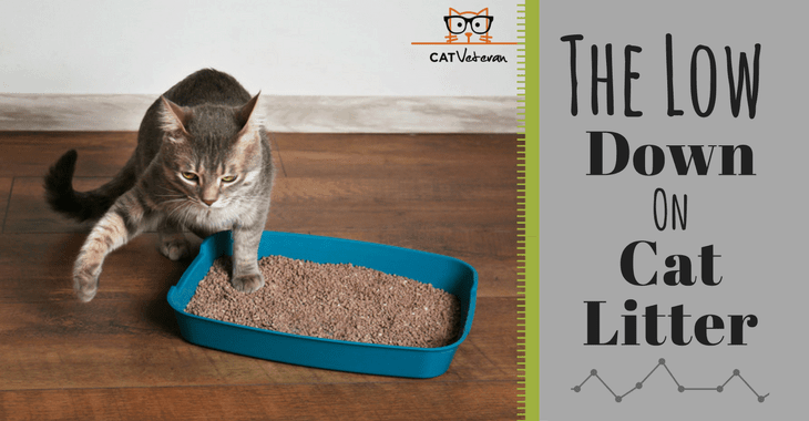 The Low Down On Cat Litter