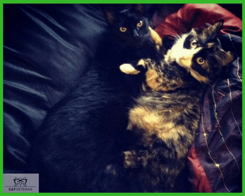 cat companions