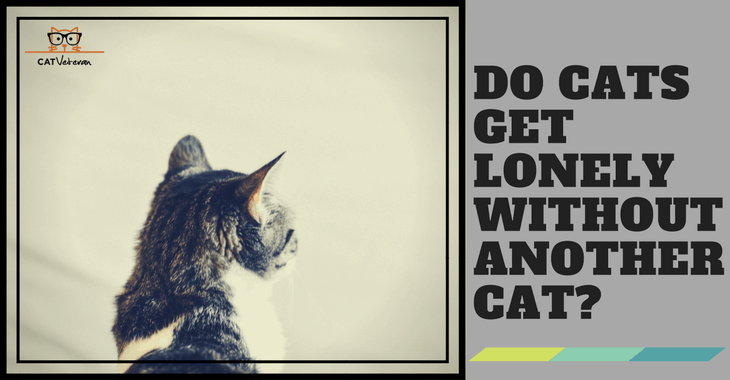 do cats get lonely without another cat