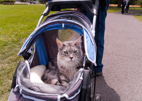 Cat Stroller For A Heavy Kitty