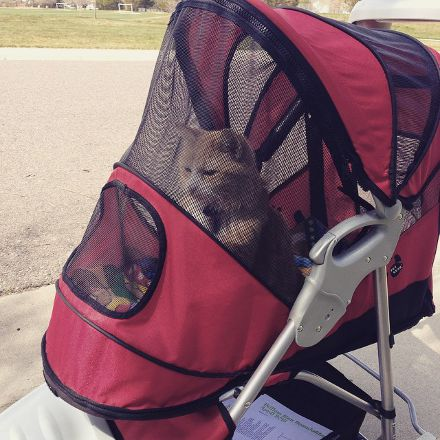 Do Cats Like Strollers? Felix Does!