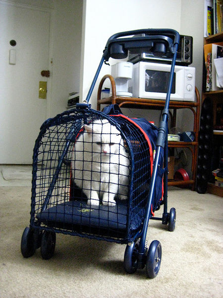 One Cat Being Lured Into A Pet Stroller