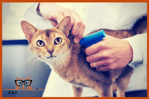 microchipping implant procedure on a cat