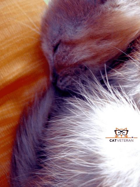 serious flea issue on kitten