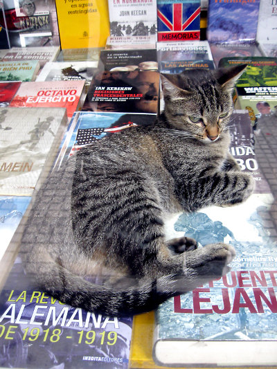 story time with a cat on a book