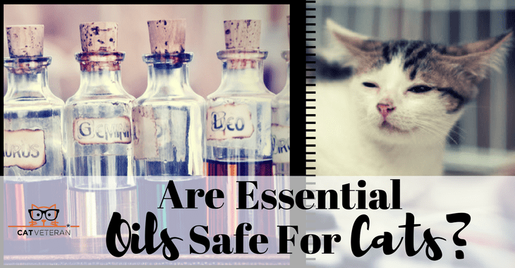 are essential oils safe for cats