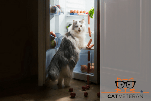 cat caught on camera steals sausage from the refrigerator