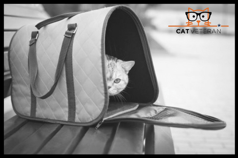 cat hiding in a pet carrier