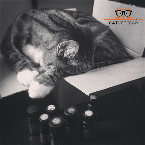cat sleeping in a box surrounded by essential oils