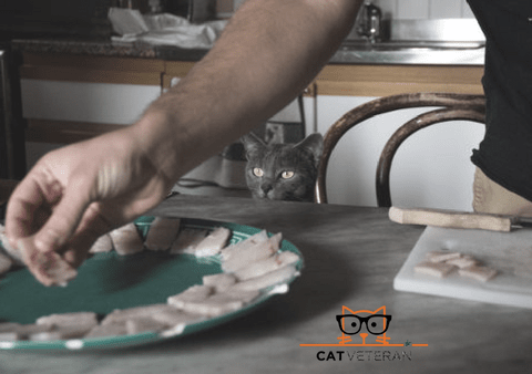 grey cat sneaking a peak at cheese on a plate opt