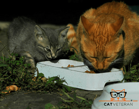 kitten and adult cat eating outside from a 2 cup bowl