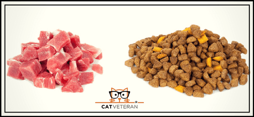raw cat food vs dry cat food