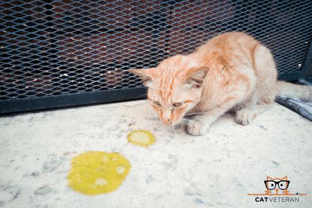 sick ill pet cat with vomit on floor