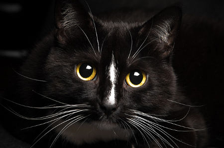 black cat with eyes fully dilated out of fear