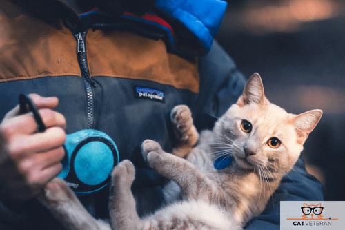 cat on leash travel cat veteran (1)
