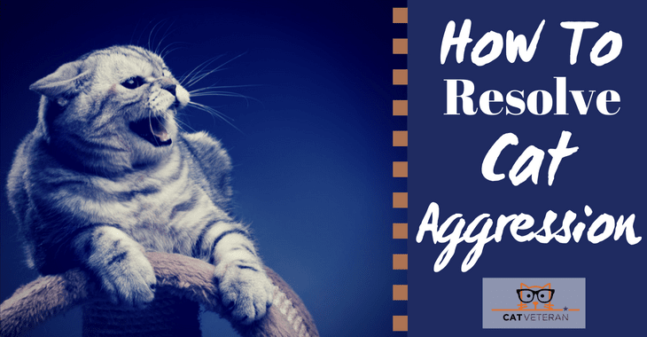how to resolve cat aggression