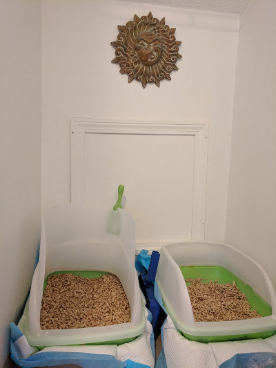 breeze litter boxes with sun craft stinky face opt