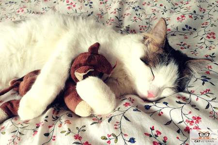 kitty cuddling with toy on a bed sleeping