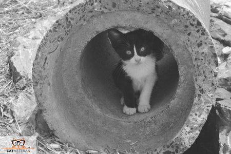 cat in outdoor cat tunnel cat veteran