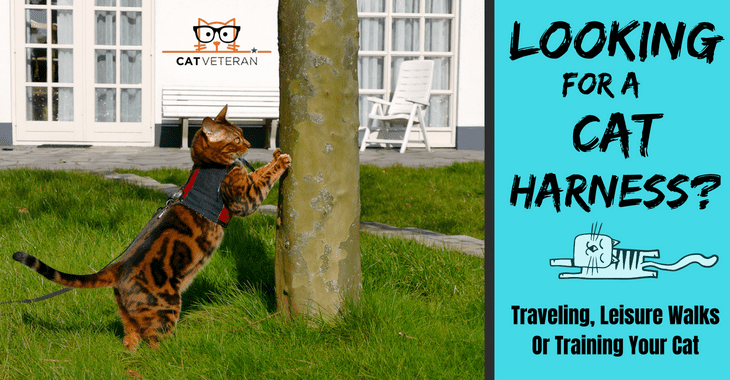 the best cat harness