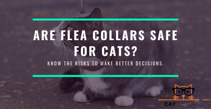 Are Flea Collars safe For Cats