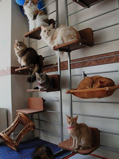 PawHut 108 inch Floor to Ceiling Adjustable Staggered Climbing Cat Tree Tower