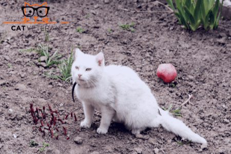 White cat playing with a ball in the garden with a flea collars