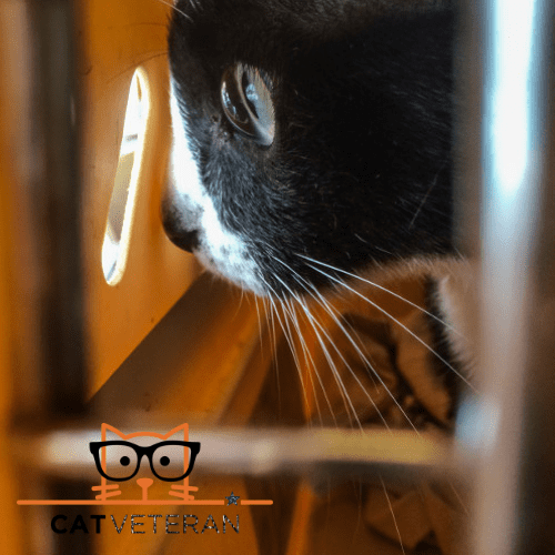 black and white cat looking out of a hole in cat crate at the veterinarians
