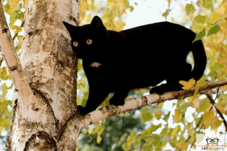 black cat outside up on a tree branch