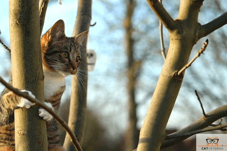 cat in tree with branches