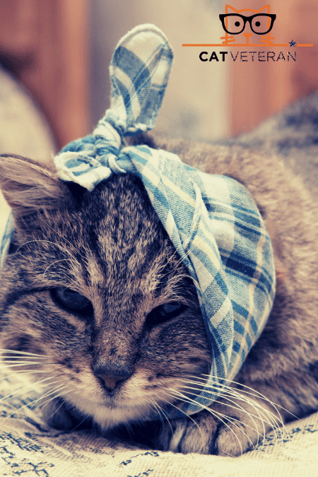 can cats catch colds