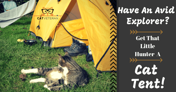 cat tent for your outdoor or indoor cat