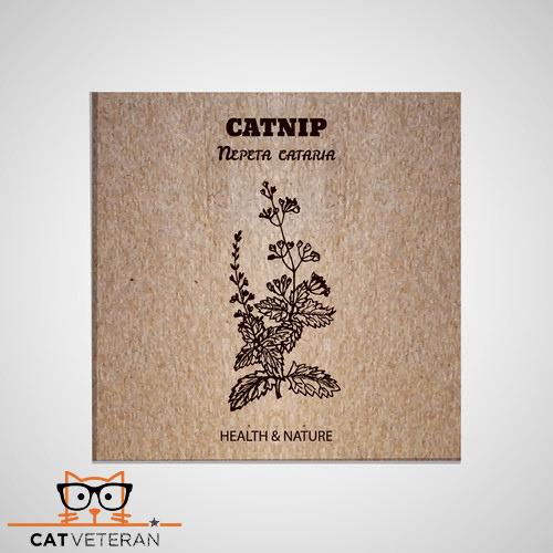 catnip nepeta cataria herb for cats