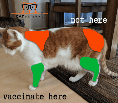 foo foo side profile of where to administer cat vaccines