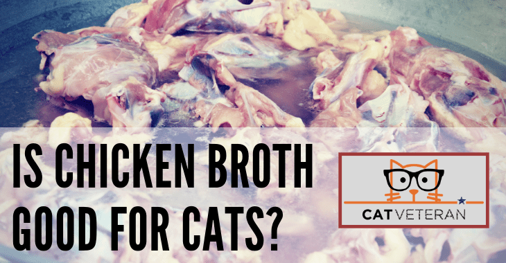 Is Chicken Broth Good For Cats? (Quick & Easy RECIPE)