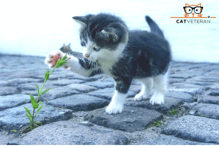 kitten playing with flower in ground