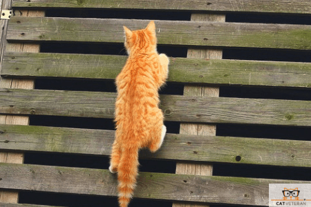 orange cat climbing a pallet type ladder outside